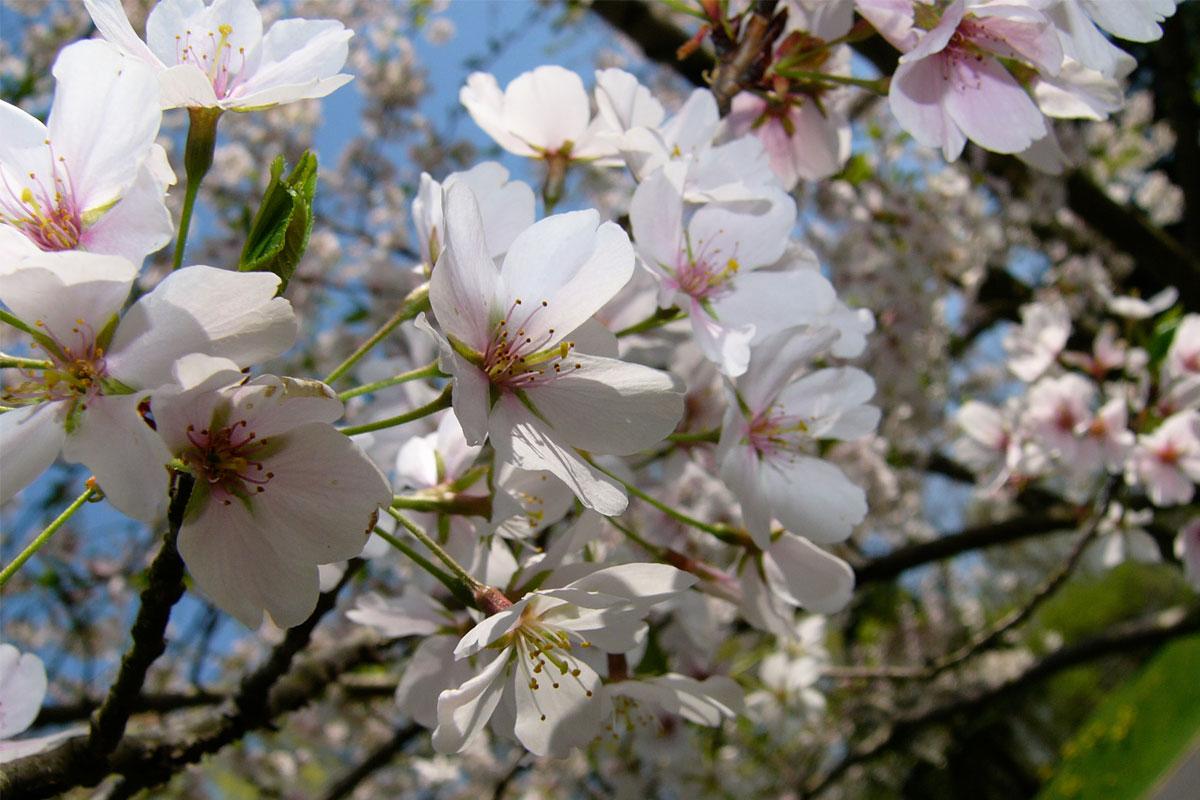 桜 季節のおすすめ 阪神フード
